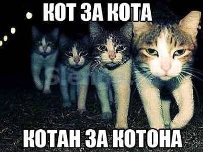 котаны